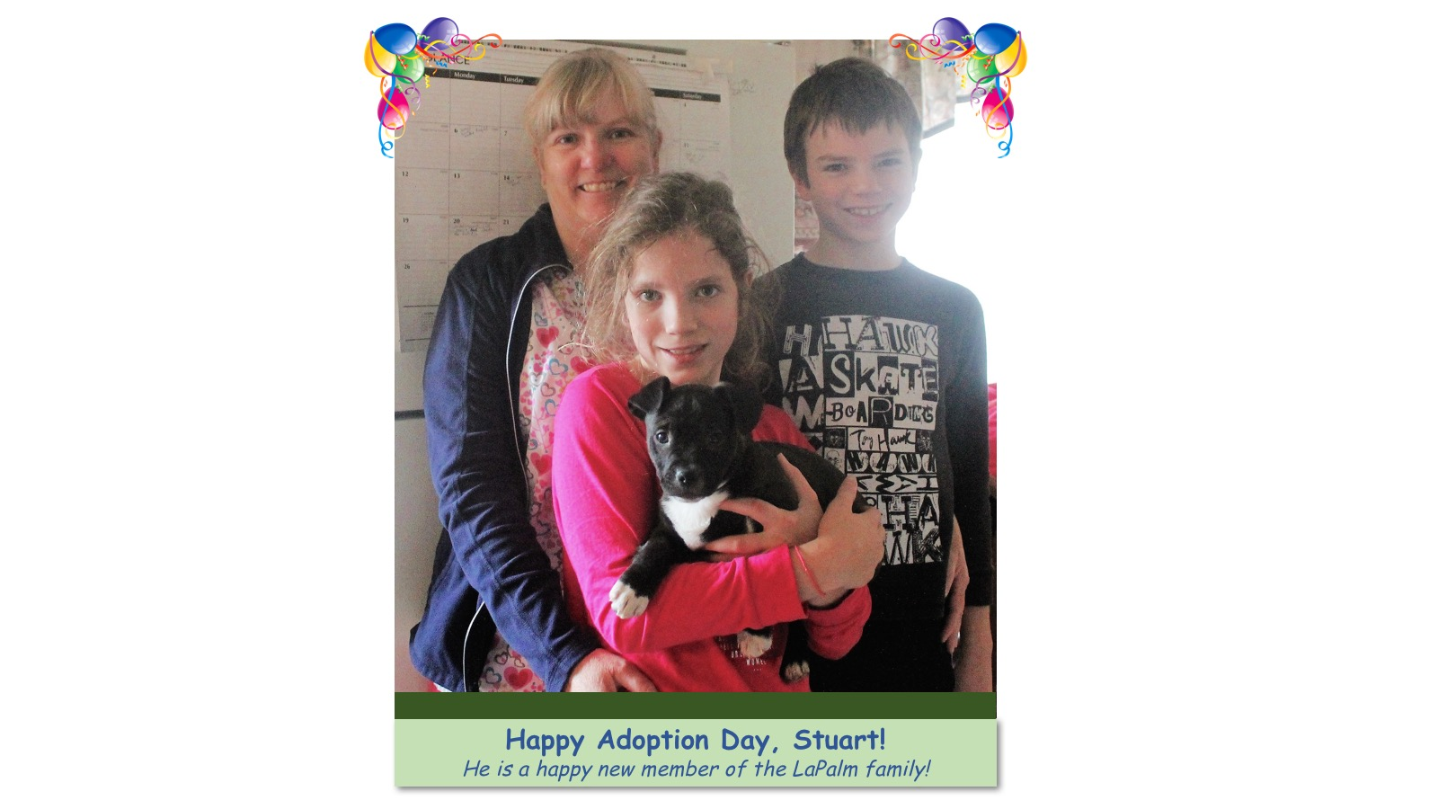 Stuart_Adoption_photo.jpg