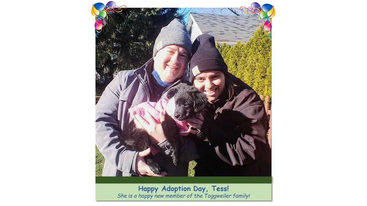 Tess_Adoption_Photo_2021.jpg