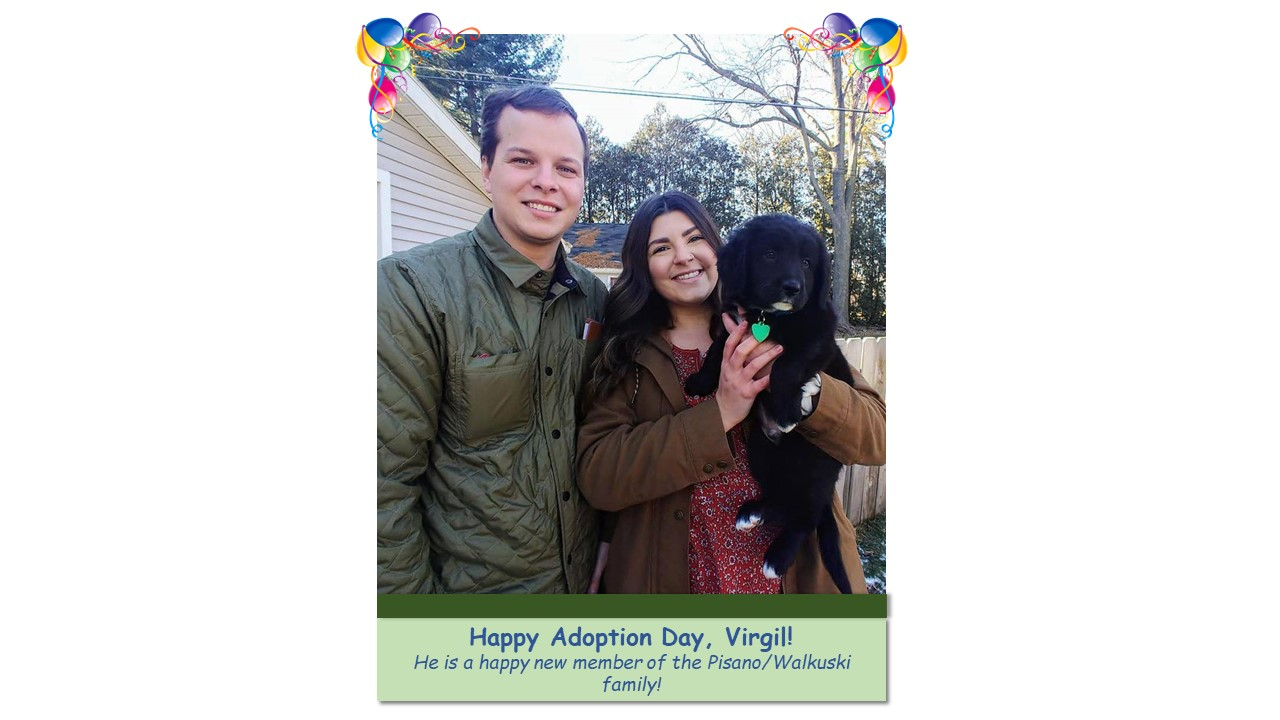 Virgil_Adoption_Photo_2021.jpg